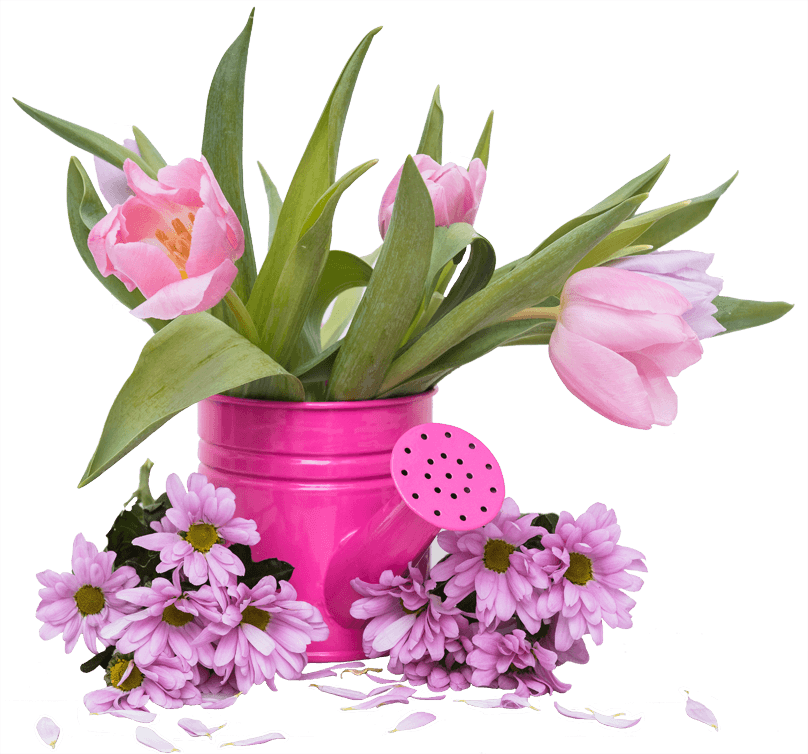 soft-tulips-in-watering-pot_1704231